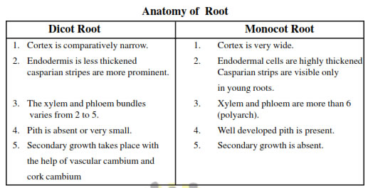 Anatomy Of Flowering Plants biology Class 11 Notes Download