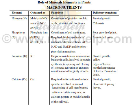 Mineral Nutrition NCERT Notes for Class 11 Download in pdf