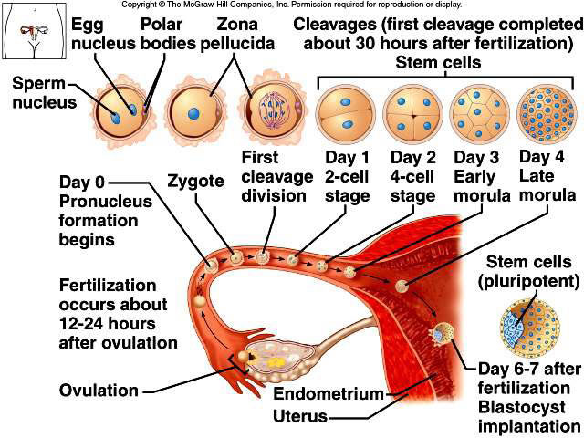Human Reproduction Process in Animals With Detail Pdf Download