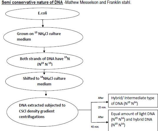 molecular basis of inheritance class 12 notes pdf download